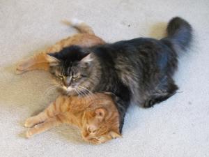 Toby & Peanut